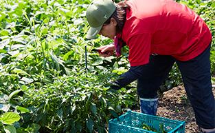 自社農場での農業研修